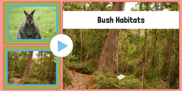 Bush Habitat Photo PowerPoint - australia, Science, Year 1, Habitats, Australian Curriculum, Bush, Living, Living Adventure, Good to Grow, Ready Set Grow, Life on Earth, Environment, Living Things, Animals, Plants, Photos, Photographs, PowerPoint