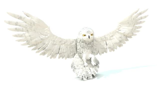 free snowy owl ar quick look model rh twinkl co uk