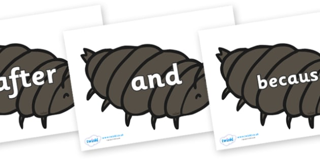 Connectives on Woodlice - Connectives, VCOP, connective resources, connectives display words, connective displays