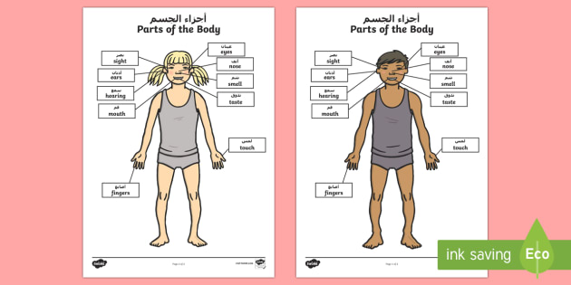 Parts of the body senses labelling worksheet activity sheet parts of the body senses labelling worksheet activity sheet arabicenglish parts of ibookread Download