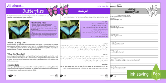 Butterfly Reading Comprehension Arabic/English