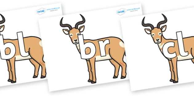 Initial Letter Blends on Antelopes - Initial Letters, initial letter, letter blend, letter blends, consonant, consonants, digraph, trigraph, literacy, alphabet, letters, foundation stage literacy