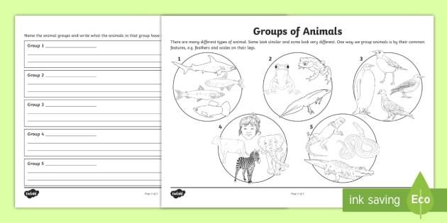 animal groups worksheet australia animal groups worksheet. Black Bedroom Furniture Sets. Home Design Ideas