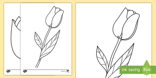 Tulip Template Colouring Pages (teacher made)