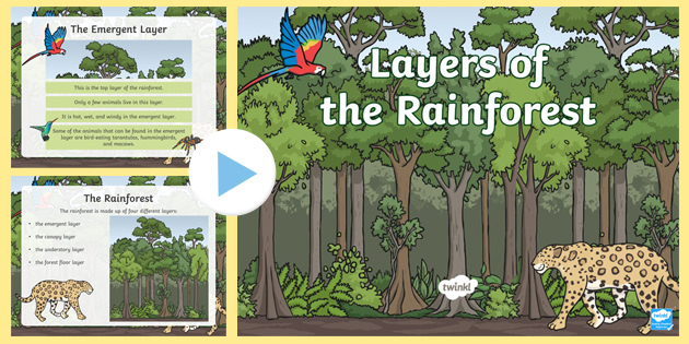 Layers Of The Rainforest PowerPoint Science Resource Twinkl