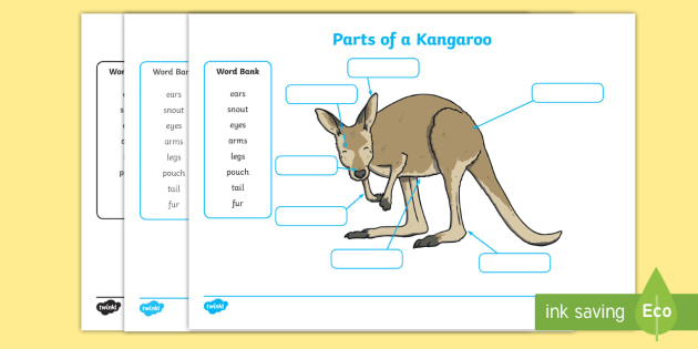 Parts Of A Kangaroo Labelling Worksheet