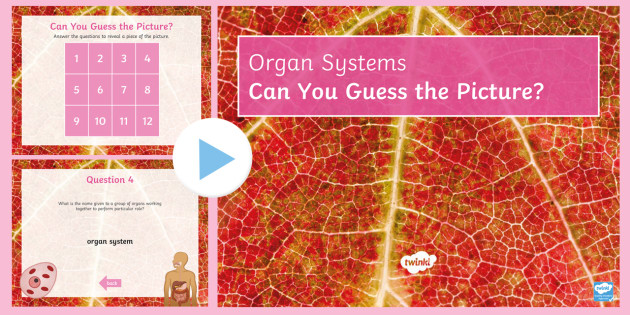 Organ Systems Quiz PowerPoint - PowerPoint Quiz, Organ, Organ System, Cell, Organism, Organisation, Body Systems