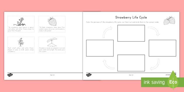 Strawberry Life Cycle Ordering Worksheet Activity Sheet
