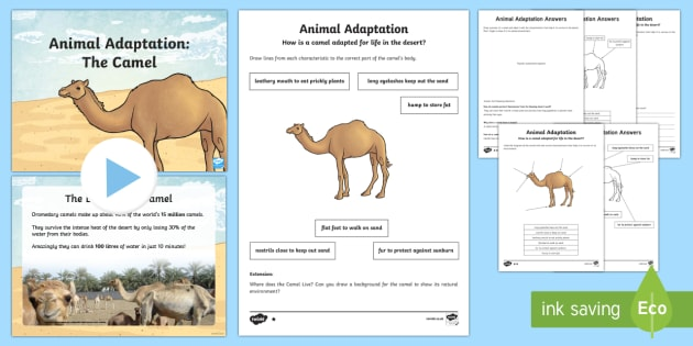 Camel Adaptation Powerpoint And Activity Pack Science Living