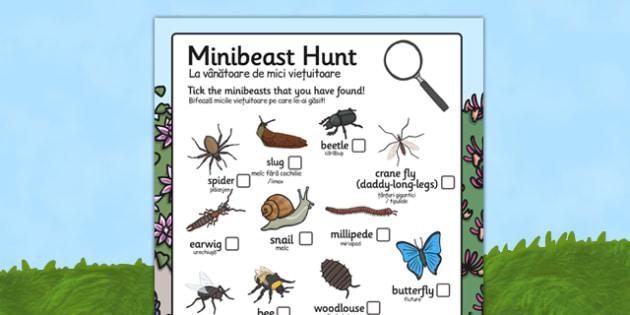 Minibeast Hunt Sheet Romanian Translation - romanian, Minibeast hunt, minibeast investigation, finding minibeasts, Minibeasts, Topic, Foundation stage, knowledge and understanding of the world, investigation, living things, snail, bee, ladybird, butt