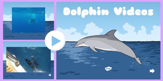 Under the Sea Dolphin Video PowerPoint - under the sea, dolphins, dolphin videos, dolphin powerpoint, under the sea videos, under the sea powerpoint
