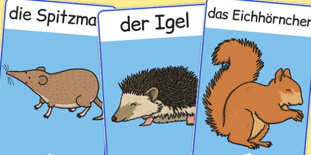 German Animals Display Posters - poster, displays, display, animal