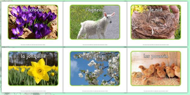 Photos de printemps Spring Display Photos French - french, Spring, seasons, photo, display photo, lambs, daffodils, new life, flowers, buds, plants, growth