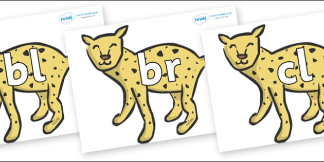 Initial Letter Blends on Cheetahs - Initial Letters, initial letter, letter blend, letter blends, consonant, consonants, digraph, trigraph, literacy, alphabet, letters, foundation stage literacy