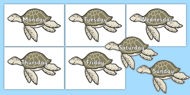 Days of the Week on Turtles - days of the week, days, week, turtles, animals
