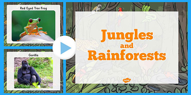Ks2 the rainforest geography the rainforest ks2 jungle and rainforest photo powerpoint fandeluxe Image collections