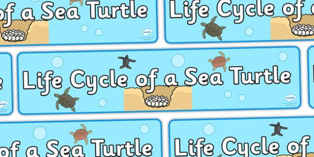 Sea Turtle Life Cycle Display Banner - sea turtle banner, life cycle of a sea turtle banner, display, banner, display banner, sea turtle life cycle banner