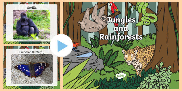 jungle and rainforest photo powerpoint jungle rainforest