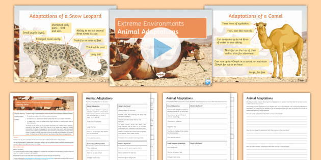 Animal Adaptations To Extreme Environments Lesson Pack Camel