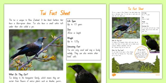 New Zealand Native Birds Tui Fact Sheet - nz, new zealand, Native, birds, animals