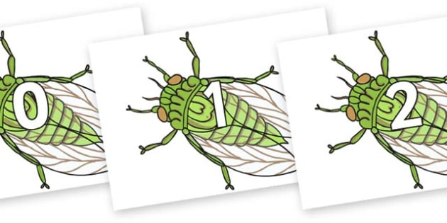 Numbers 0-50 on Cicada - 0-50, foundation stage numeracy, Number recognition, Number flashcards, counting, number frieze, Display numbers, number posters