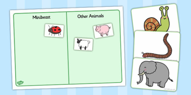 Minibeast and Other Animals Sorting Activity - animals, insects, sorting
