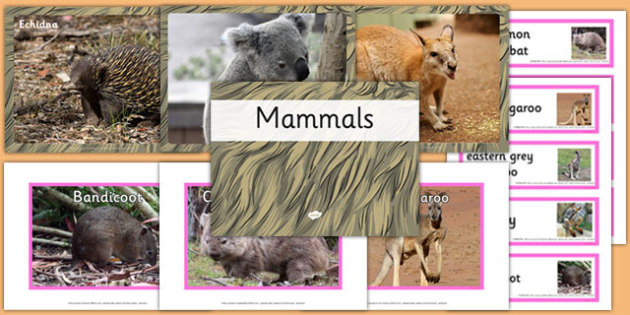 Australian Mammals pack - australia, animals, mammals, pack, australian