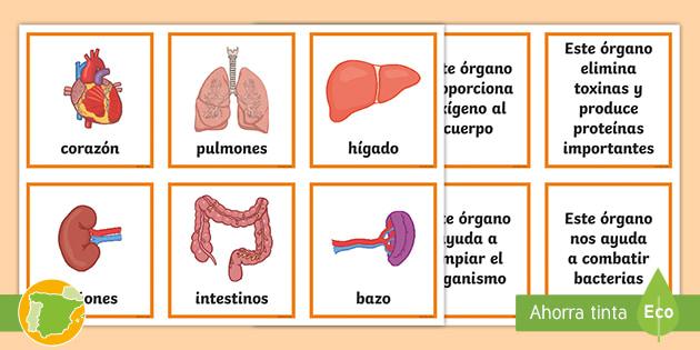 Tarjetas De Emparejar Los órganos Del Cuerpo Humano