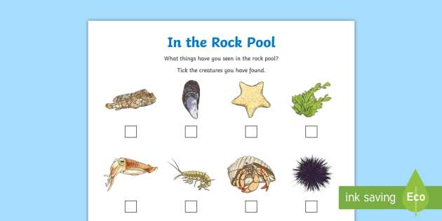 In A Rock Pool Checklist Worksheet Activity Sheet Sea