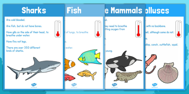 Under the Sea Animal Groups Display Posters - display, posters