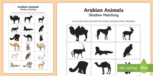 Arabian Animals Silhouette Matching Cards - Science: Living World, camel, oryx, Arabian, animal, falcon, saluki, leopard, hare, lizard, gazelle,
