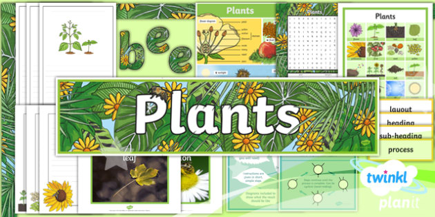 Plants: Jack and the Beanstalk Y3 Display Pack  - Traditional stories, life processes, living things, explanation texts, seed