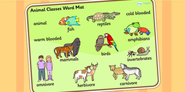 Animal Classes Word Ma...