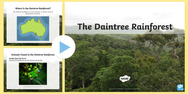 The Daintree Rainforest PowerPoint - Australian Rainforest, Rainforest, Australian Animals, Environment, Daintree rainforest, plants and