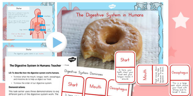 The Digestive System in Humans PowerPoint and Activity Pack - australia