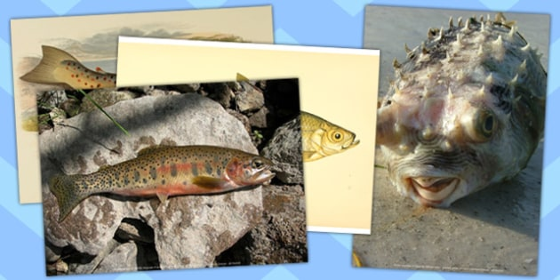 Fish Photo Pack  (Under the Sea) - fish, photo pack, photo, pack, display, art