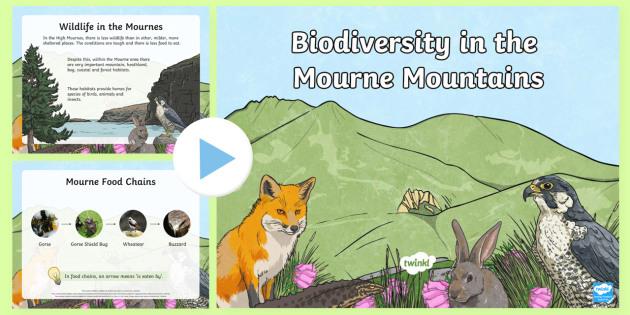 Biodiversity in the Mourne Mountains PowerPoint - Mourne, mountains, biodiversity, wildlife, plants, habitats, animals, Ireland, County Down, Juniper,