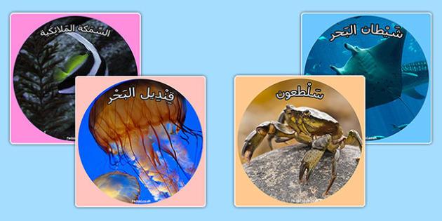 قصاصات صور عرض عن تحت البحر - مخلوات بحرية، أعماق البحر، البحر