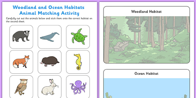 Woodland And Ocean Habitats Animal Sorting Worksheet