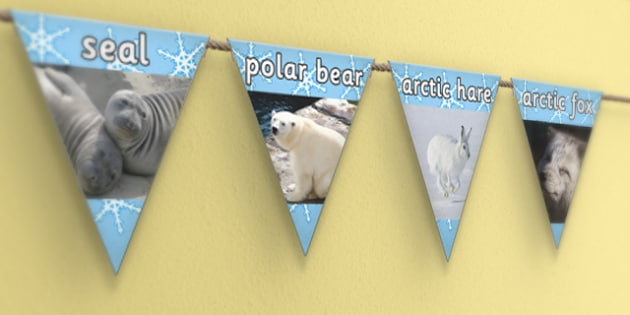 Polar Regions Display Photo Bunting - polar, display, bunting