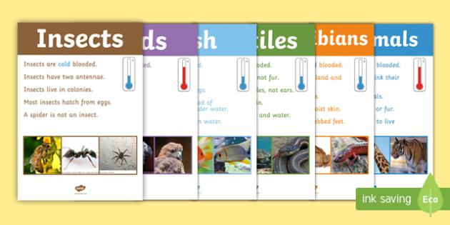Animal Groups Display Poster Photos - animal groups, display