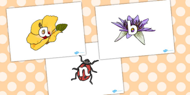 Phase 2 Phonemes on Flowers and Insects - phase 2, phonemes, flowers