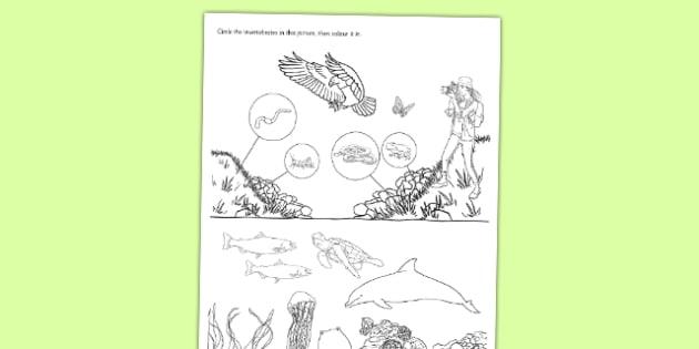 Spot the Invertebrates Activity Sheet - living things, habitats, variation, classification, grouping, invertebrates, characteristics, keys, worksheet