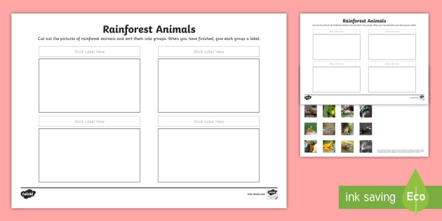 Rainforest Animals Sorting Activity Sheet - rainforest, animals, sorting, activity, sheet, worksheet