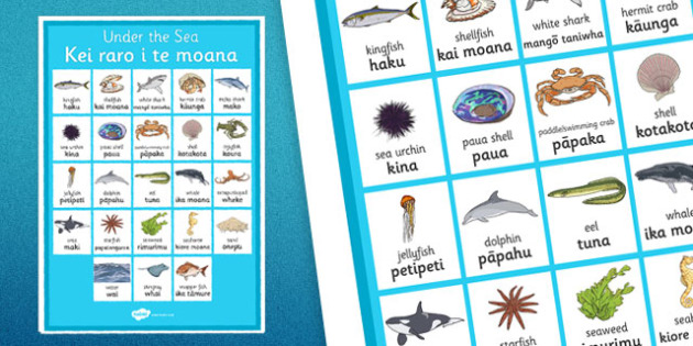 Under the Sea Vocabulary Poster Te Reo Māori - sea, seaweek, animals, Māori