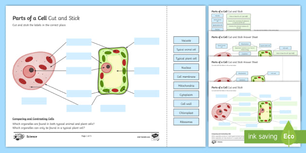 parts of a cell worksheet parts of the cell worksheet 0   Worksheets as well Year 7 cells worksheet together with Quiz   Worksheet   Structure   Function of a Cell   Study together with Animal Cell Printable Whats Parts Of Animal Cell Worksheet Pdf furthermore Worksheet Cell likewise Cell Parts and Functions Worksheet   Siteraven in addition Plant and animal cell worksheet by rosie1999   Teaching Resources besides cell memne coloring packet – johnrozumart additionally GCSE Parts of a Cell Cut and Stick Worksheet additionally Incredible Edible Cell Worksheet by Julie Boro   TpT also  likewise Cell Parts Worksheet   Cell Memne Lesson   My Schoolhouse moreover Animal Cell Printable And Plant Worksheets Coloring Activity Key Free further Cell Structure   Cells  Cells  Cells   Science worksheets additionally Animal Cell Structure and Function Worksheet  Bloom's Taxonomy  by moreover CELLS alive  Study Aids. on parts of a cell worksheet