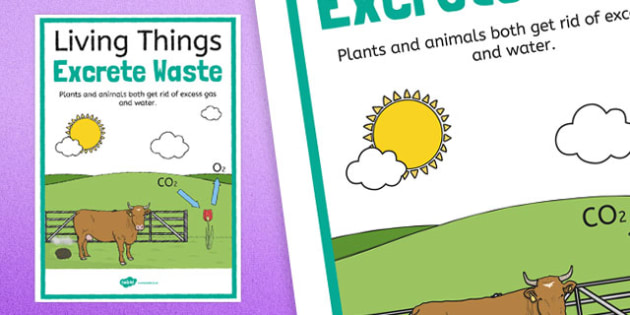 Living Things Excrete Waste Display Poster - australia, living things, excrete, waste, display poster, display, poster