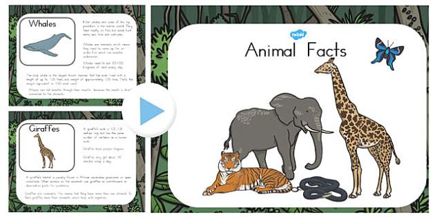Animal Facts PowerPoint - australia, animal, facts, powerpoint