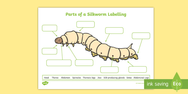 Parts Of A Silkworm Labelling Worksheet