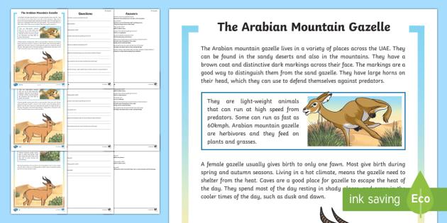 Arabian Mountain Gazelle Differentiated Reading